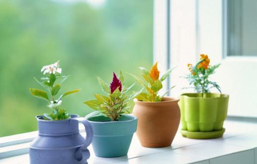 給你支招讓你養好花