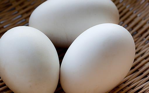 鵝蛋的營養價值 老人兒童要多吃